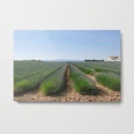 Valensole Lavender Metal Print
