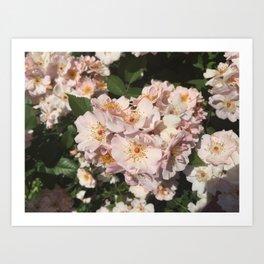 Summer Fresh Flowers Art Print