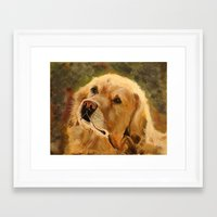 golden retriever Framed Art Prints featuring Golden Retriever by Tidwell