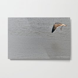 The Birds of Cutler Bay Wetlands (Amazing Grace!) Metal Print