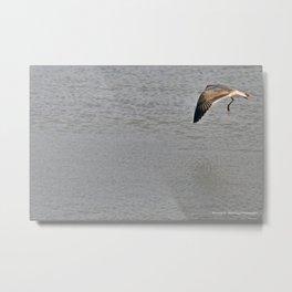 The Birds of Cutler Bay Wetlands (Amazing Grace!) Metal Print