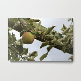 Apple Picking Metal Print