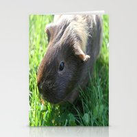 guinea pig Stationery Cards featuring Guinea Pig by Rose&BumbleBee