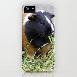 Lovely Guinea Pig iPhone Case