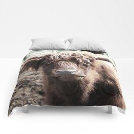 Longhorn Comforters
