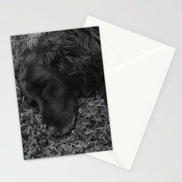 Lucky Stationery Cards