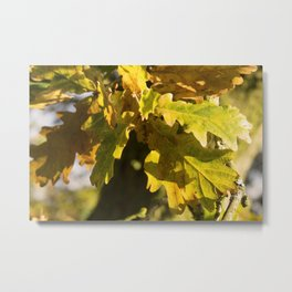 Autumnal Shades Metal Print