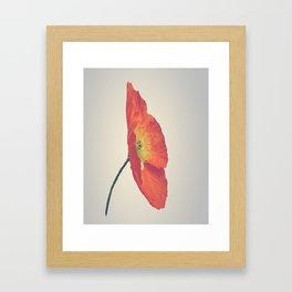 Poppy in Whole Framed Art Print