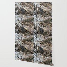 Textured Tree Stump Of Eucalyptus Tree  Wallpaper