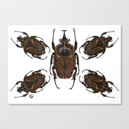 Goliath Flower Beetle Canvas Print