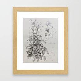 Sow Thistle (Sonchus asper) Framed Art Print