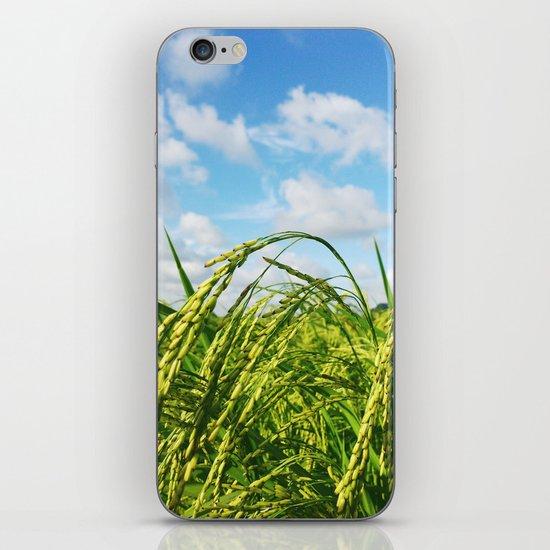 Ripe Rice iPhone & iPod Skin