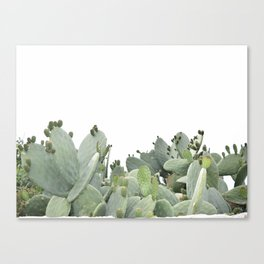 Cactus of Kefalonia Canvas Print