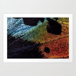 Vibrant Iridescence of The Madagascan Sunset Moth Art Print