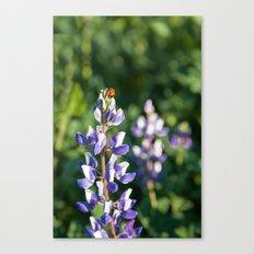 Ladybug on Lupine Flower Canvas Print