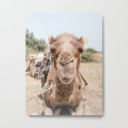 Little kiss anyone? | animal - humor - morocco - travel - print - camel - dromedary - design - joke Metal Print