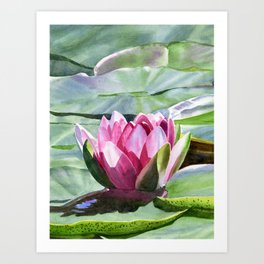 One Magenta Water Lily with pads vertical design Art Print