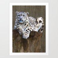 snow leopard Art Prints featuring  snow leopard by Doug McRae