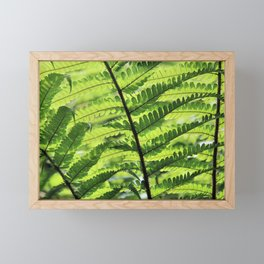 Sunlight weaving through fern fronds Framed Mini Art Print