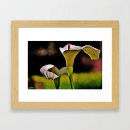 Calla Lily  Framed Art Print
