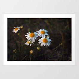 Daisies Part Two Art Print