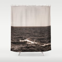 Two Vintage Retro Sepia Toned Rustic Blue Whale, Fin Whale Swimming Part 2 Shower Curtain