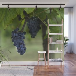 Cluster of purple grapes hanging under grapevine in vineyard Wall Mural
