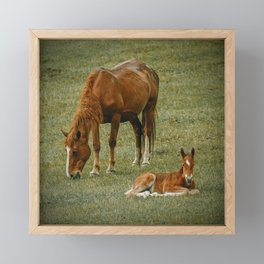 Horse And Foal Framed Mini Art Print