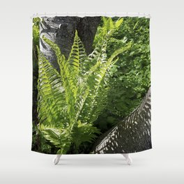 Ferns - leaves and shadows - against birch bark Shower Curtain