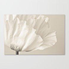 cream Canvas Print