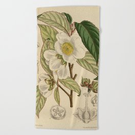 Stewartia sinensis, Theaceae Beach Towel
