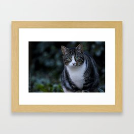 Green eyes cat Framed Art Print