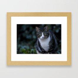 Green eyes cat Framed Art Print