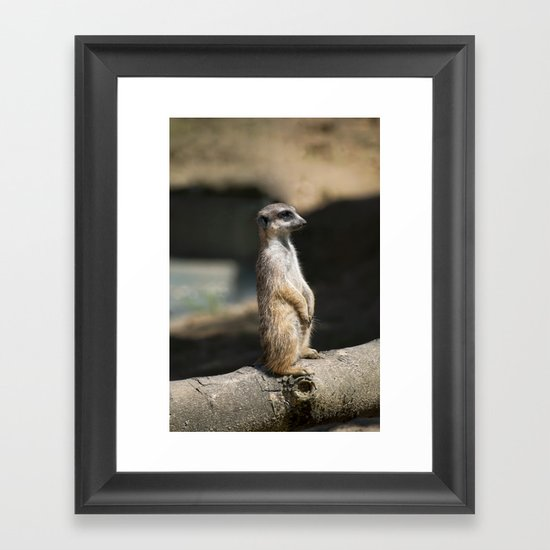 Meerkat Framed Art Print