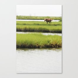 Marsh Horse Canvas Print