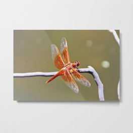Flame Skimmer Dragonfly Metal Print