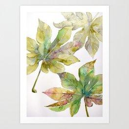 Aralia japonica Leaves Foliage Art Print