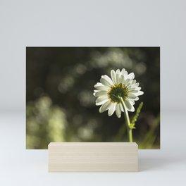 Daisy Light Mini Art Print