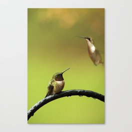 Two Hummingbirds Canvas Print