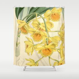 Dendrobium chrysotoxum Shower Curtain