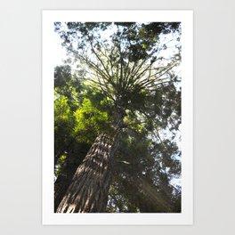 Big Oak Art Print