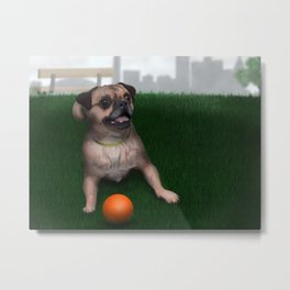 Dog playing with ball in Toronto park Metal Print