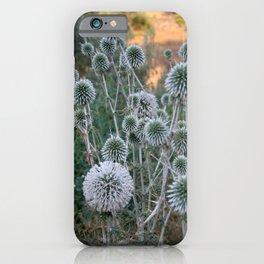 Seed Head Of Leek Flower Allium Sphaerocephalon  iPhone Case