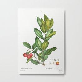Strawberry tree (Arbutus Unedo) from Traité des Arbres et Arbustes que l'on cultive en France en ple Metal Print