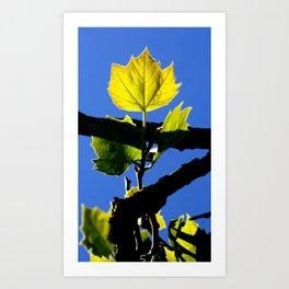 Spring Leaf. Art Print