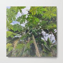 Papaya tree Metal Print