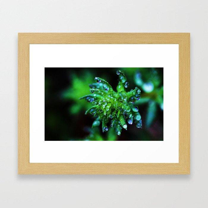 Dew Drop Succulent Framed Art Print