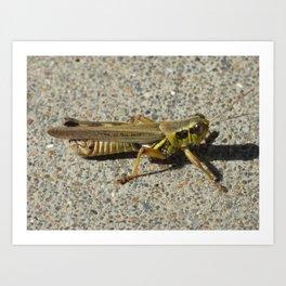 grasshopper 2018 Art Print