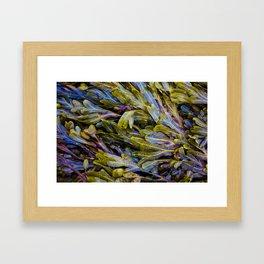 Seaweed Spectrum Framed Art Print