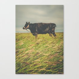 Texas Cow in the Grass Canvas Print
